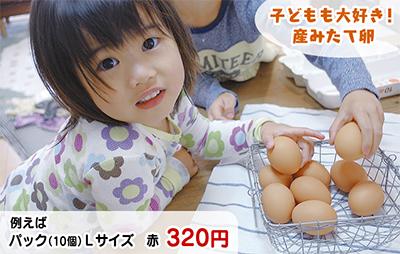 おいしい卵には理由(わけ)がある