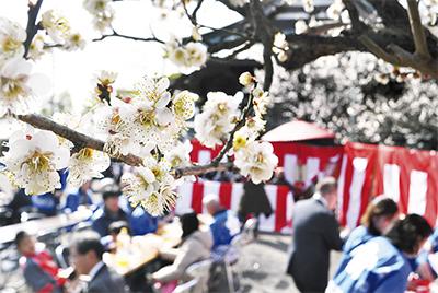 観梅会で春満喫