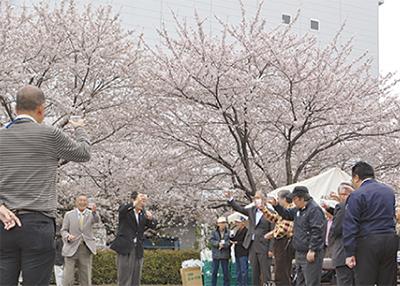 満開の桜の下「乾杯」