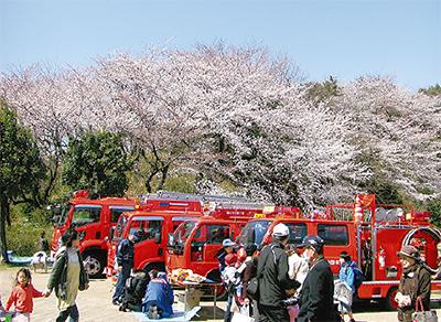 北山田でさくら祭り