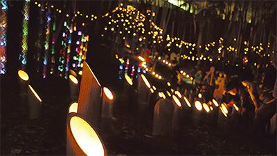 竹灯りが誘う幽玄の世界