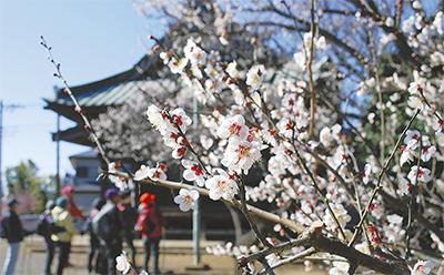 春の訪れ告げる観梅会