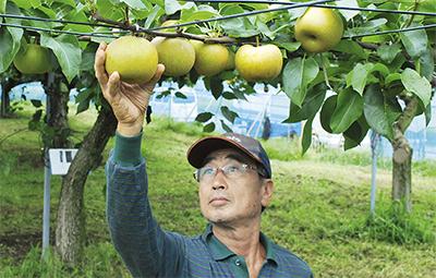 横浜ブランド収穫始まる