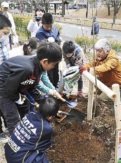山田富士公園に桜植樹