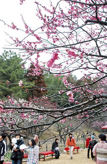 曇り空の下でも梅の花を楽しむ来場者が多かった