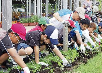 ころこロッジ前に苗植えをする児童たち