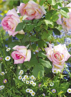 バラの香り漂う園内。ベンチも多数配置されているので、ゆっくり散策を楽しめる