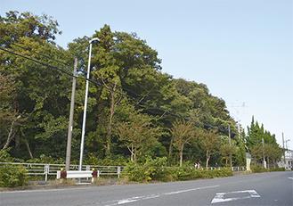 整備が予定されている樹林地=10月30日