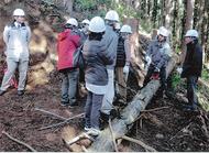 国際木材普及を