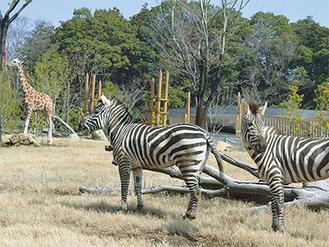 東アフリカの景観を再現した草原エリア