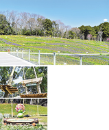 「花と緑の祭典」25日、開幕