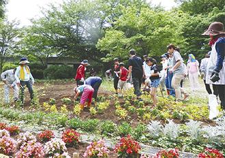 花苗を植える参加者たち(区役所提供)