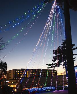 松の木から吊るされている色とりどりのイルミネーション