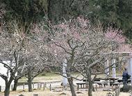 梅の花愛でる茶屋
