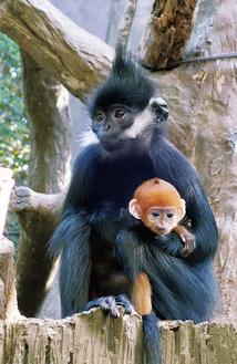 公開されたばかりの赤ちゃんと姉のココア(同園提供)