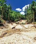 多くの斜面が崩壊し土砂が流れ込む