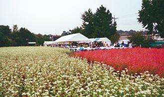 白と赤のそばの花(昨年の様子)