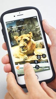 動物園で撮影した動画が毎日配信されるアプリ「one zoo」
