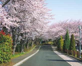 満開が美しい同校正門の桜並木