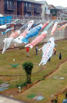 相沢雨水調整池で掲揚されている鯉のぼり(過去の様子)