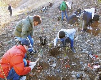 6年生が行った足尾銅山での植樹活動=同校提供