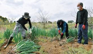 畑で実地研修を行う新入社員たちと八ッ橋さん(右)