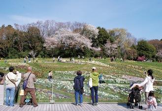 区内で自然を満喫できる場所のひとつ里山ガーデン。5月9日まで「里山ガーデンフェスタ」が開催されている