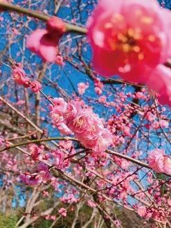 最優秀賞に選ばれた作品「いつか梅の花のように密で会いたい」=写真・旭区役所提供