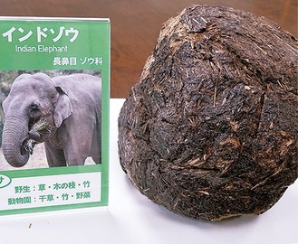 インドゾウのふん標本