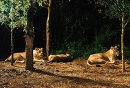 2年ぶりの「夜の動物園」