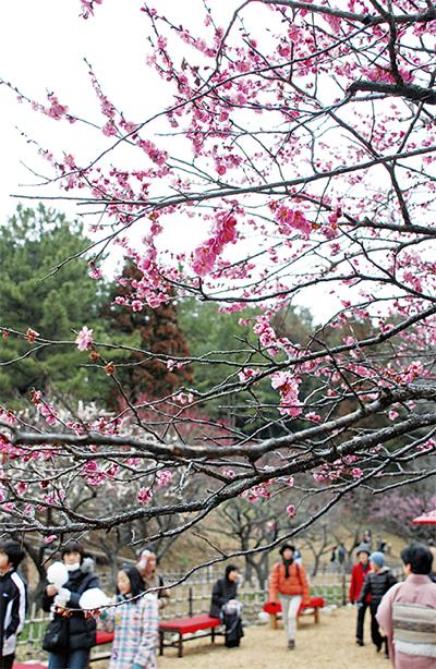 梅の花ほころび、春間近