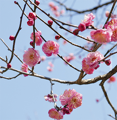春の訪れ告げ