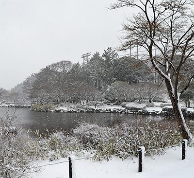 旭区でも大雪