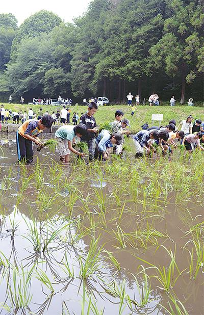 泥んこで田植え