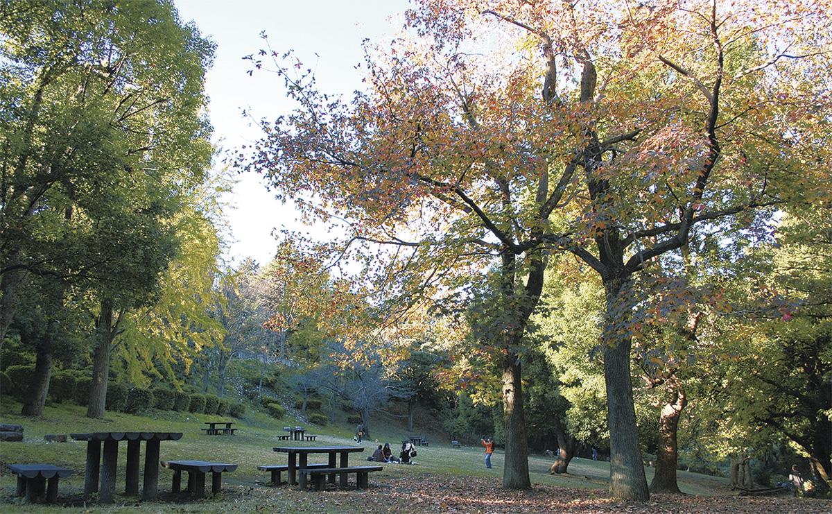 区内の秋深まる