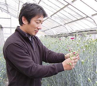品種によって花を咲かせるスピードなど「それぞれ性格が違う」と広瀬さん。週に3回、1度に約1000本ずつ手作業で収穫していく。「買ってくれた人が喜んでくれることが一番嬉しい」と話す
