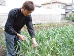 今年栽培に挑戦しているニンニク。7月の収穫を前に、芽かきの作業をする