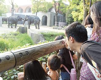 インドゾウのエリアには多くの家族が集まった