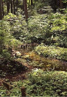 池の周辺でホタルの自生を促す