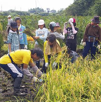 瀬谷環境ネットスタッフや教諭の指示を受けながら収穫する上瀬谷小の児童たち