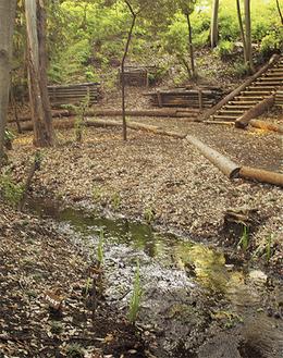 藪を切り開き、整備された蟹沢特別緑地保全地区