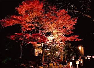 闇夜に光る紅葉(昨年の様子)