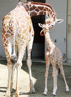 赤ちゃんを構う母親=6月20日、同園撮影