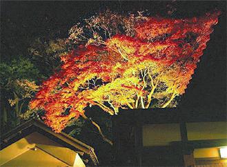 光に照らされる紅葉(昨年の様子)