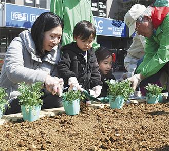ボランティアのアドバイスのもと、花を植える参加者
