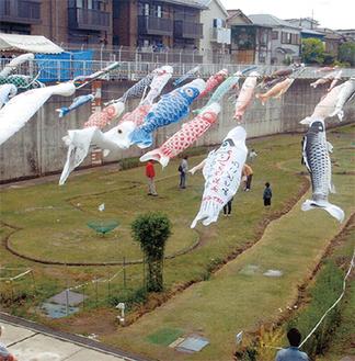 相沢雨水調整池で掲揚されている鯉のぼり※写真は昨年