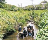 和泉川で生き物観察