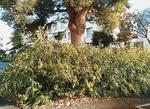 草木が伸び放題だった時期の花壇