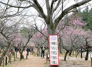 梅の花茶屋