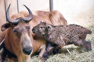 母親のメイと赤ちゃん(同園提供)